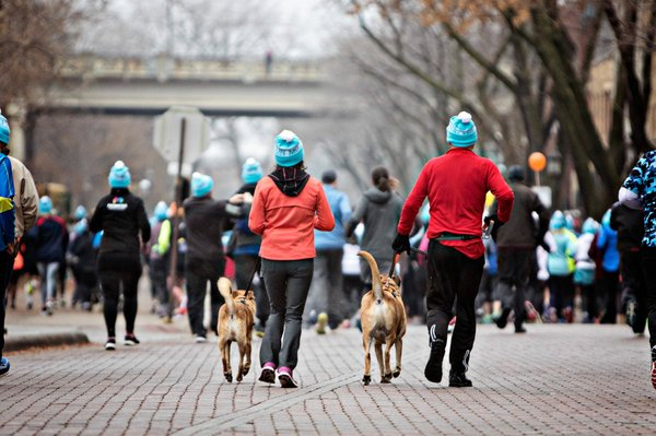 dogs running with their owners during the mustache run