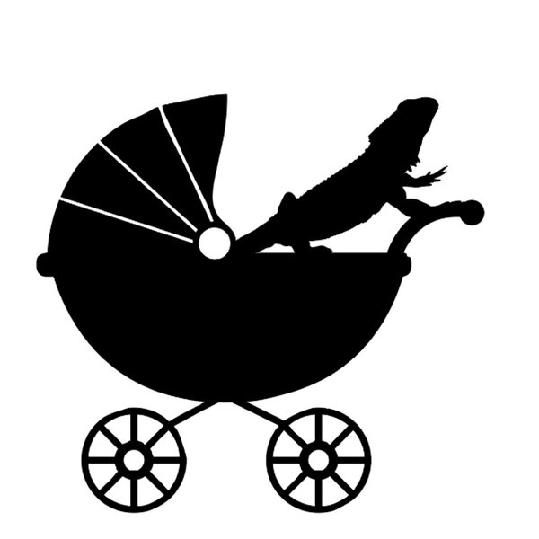 Stroller with lizard