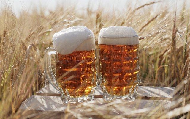 two mugs of beer in a field of grain