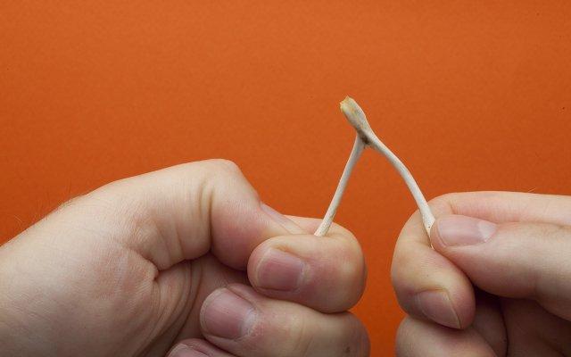 hands breaking a wishbone