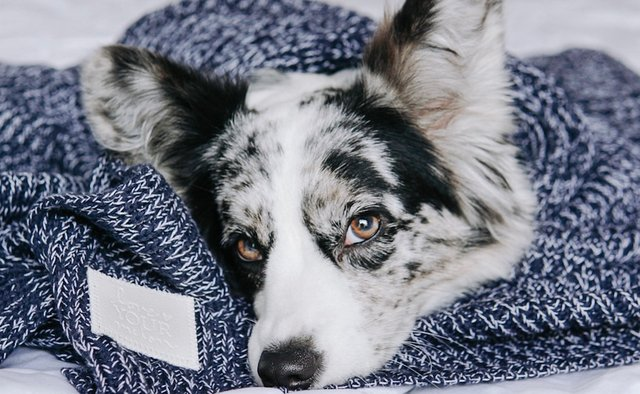 Navy and white speckled blanket with dog laying on it