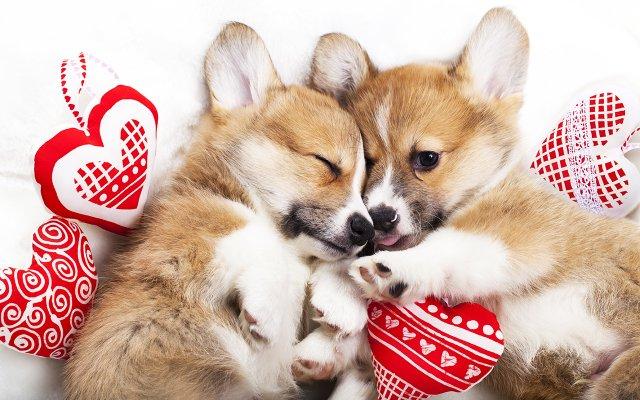 Valentine's Day Dogs