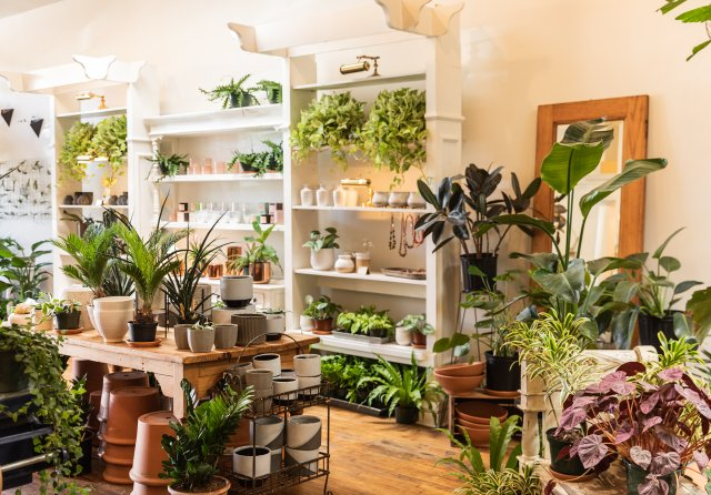 Display of plants and flowers at Ergo