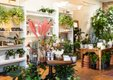 Plants and flowers at Ergo