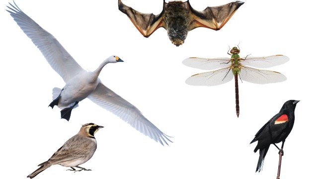 collage of animals that fly