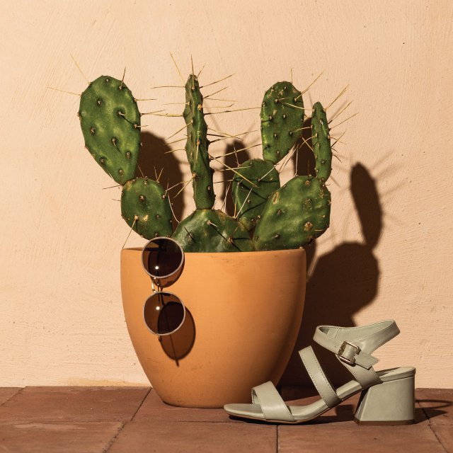 Cactus in pot with sunglass and sandal