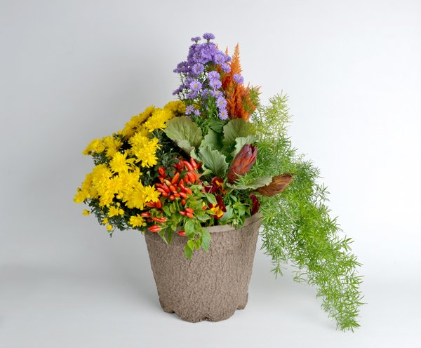 Potted plant with thriller, filler, spiller method