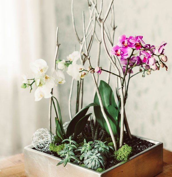 Orchid and Succulent Planting