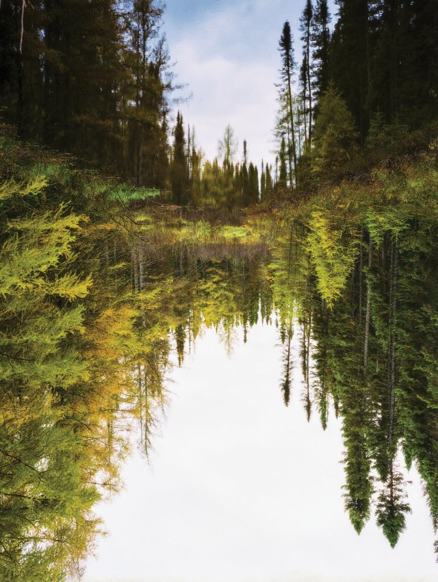 forest in the reflection of a pond