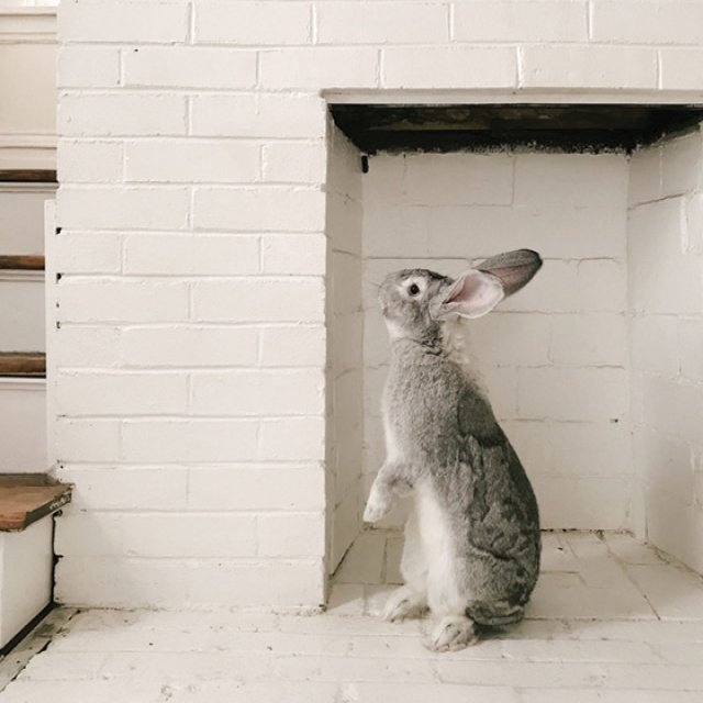 Clark's pet rabbit