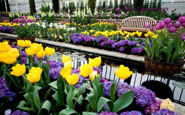TulipsMarjorieMcNeelyConservatoryStPaul-copy.jpg