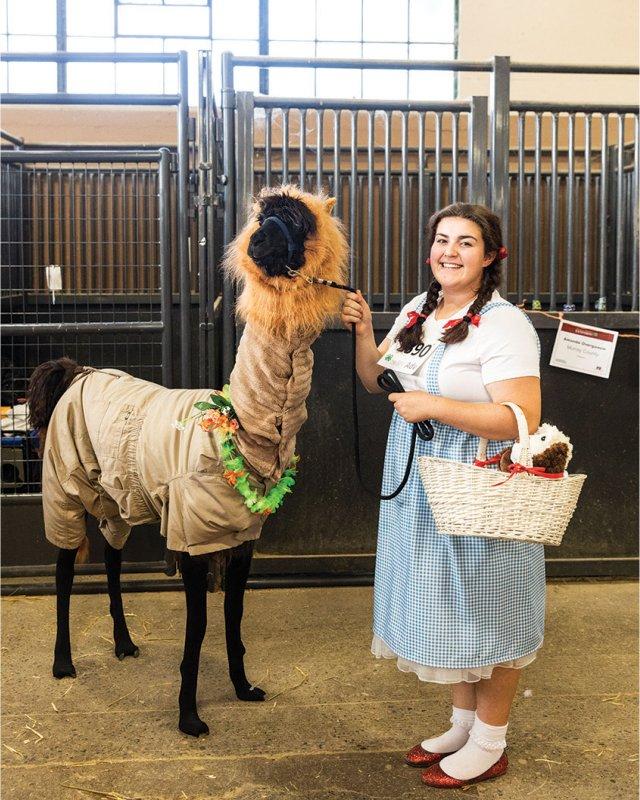 wizard of Oz llama