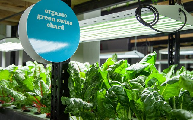 Organic Swiss chard sign at Urban Organics