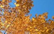 fall-(1).jpg