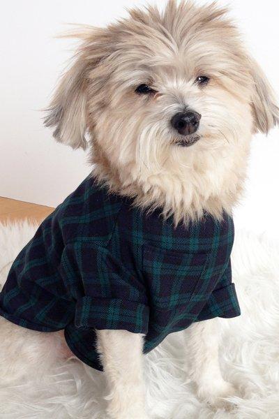 DogThreadsgreenplaid-3.jpeg