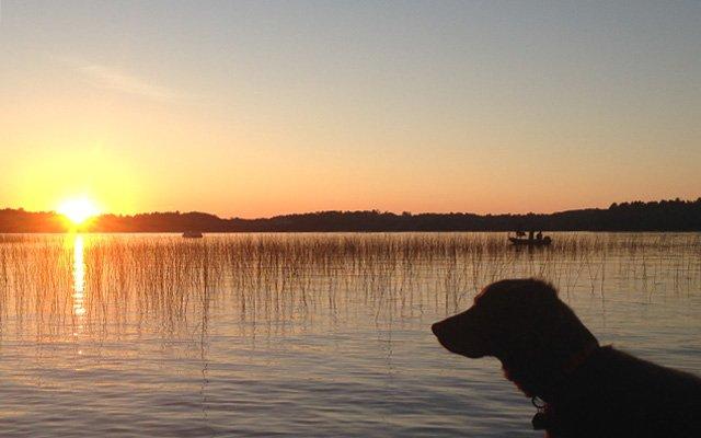 Dog at the lake at sunset