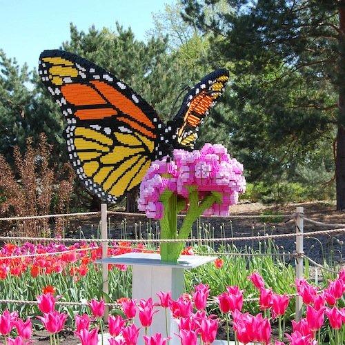 monarch-on-milkweed-by-sean-kenney.jpg