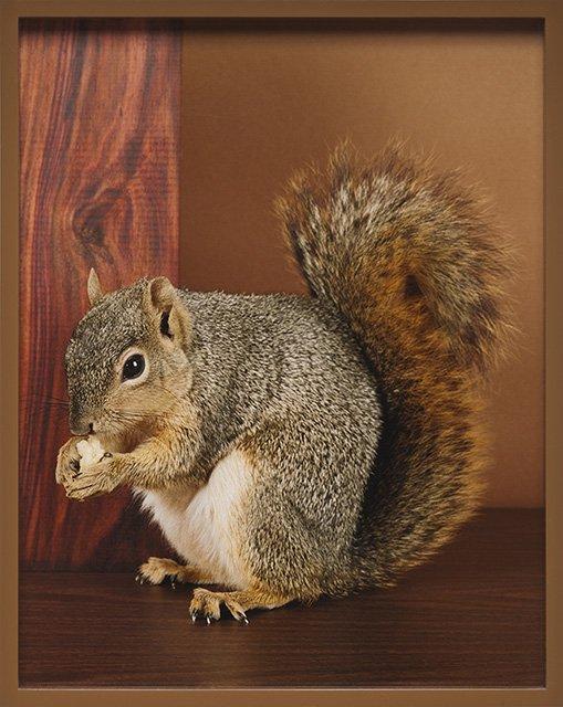 OP_Lassry_Squirrel_PP-(1).jpg