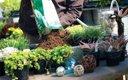 0612-Plant_640s.jpg