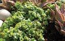 0612-PlantTip_640s.jpg