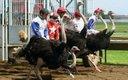 0612-Ostriches_640s.jpg